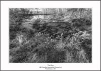 2016_05_07_0085125 The bog